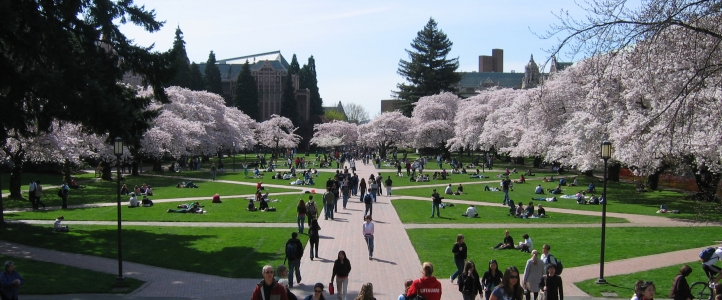 University of Washington Quad in Spring