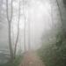 Moody trail walk